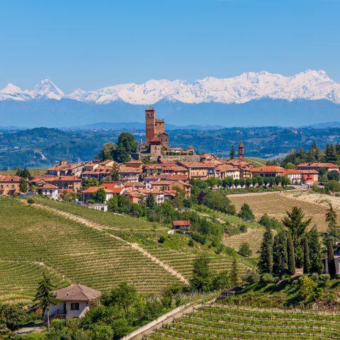 Image of Piedmont Wineyards