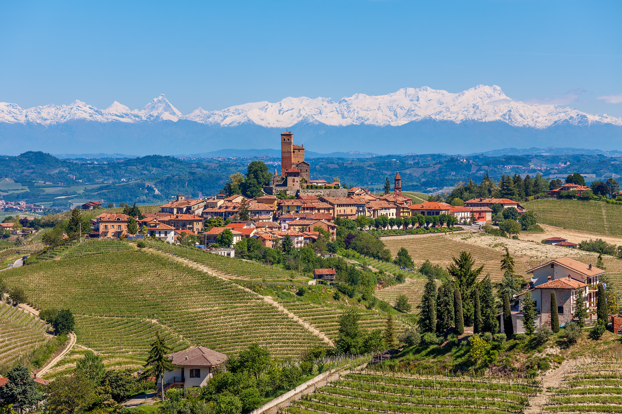 Image of Piedmont Wineyards